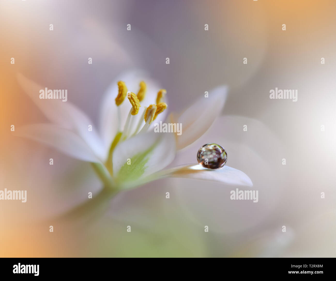 Beautiful Nature Macro Shot Magic Flowers Art Design Extreme
