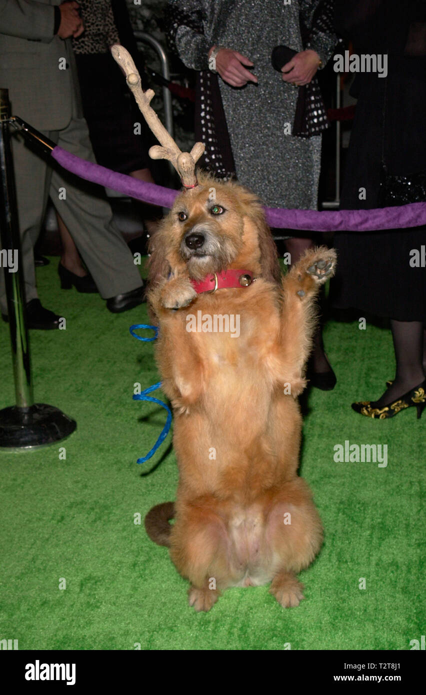 The Grinch Who Stole Christmas Dog.Los Angeles Ca November 08 2000 Canine Actor Kelly At