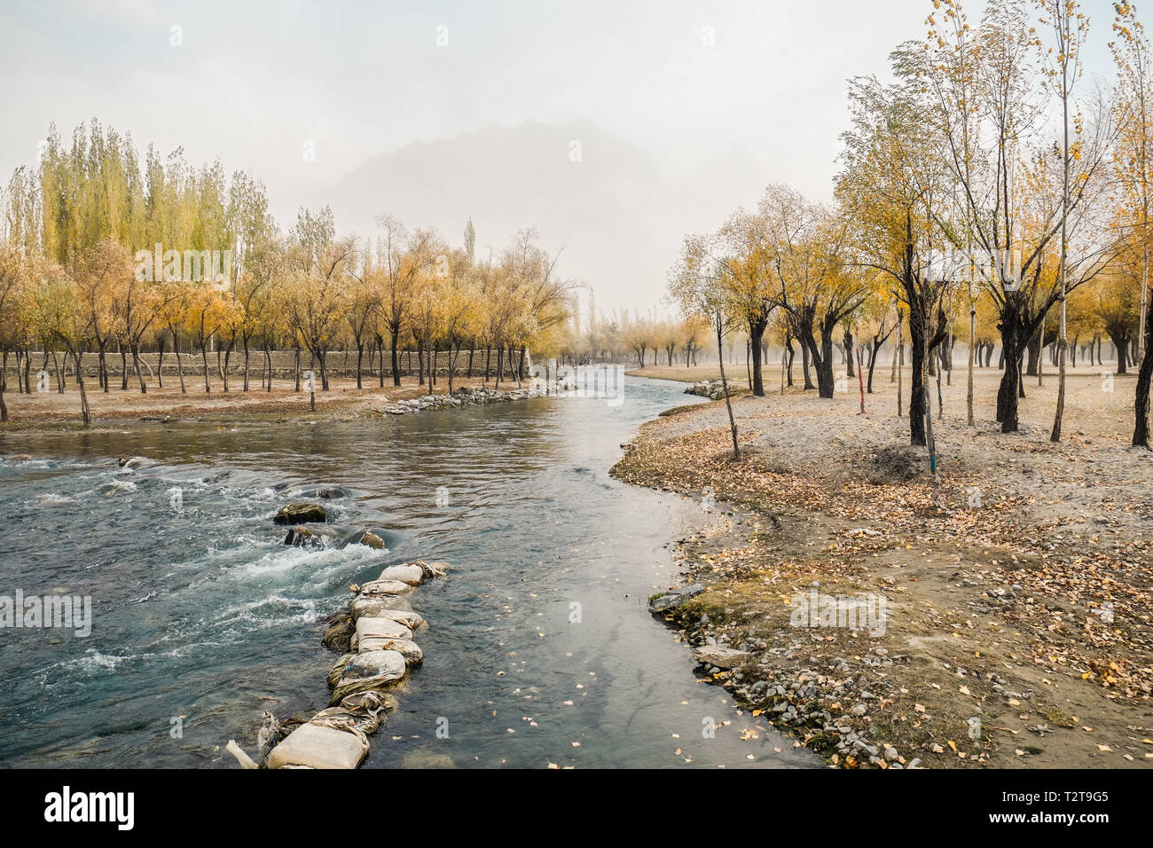 Landscape view of autumn foliage with flowing Hargisa river and cloudy mountain behind the morning fog. Skardu, Gilgit Baltistan, Pakistan. - Stock Image