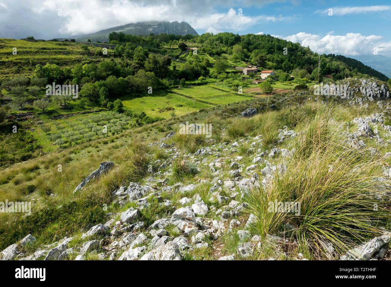 Italy, Campania, Cilento National Park,  Masseta and Infreschi  Coast, farmland; bg.: Mt. Bulgheria - Stock Image