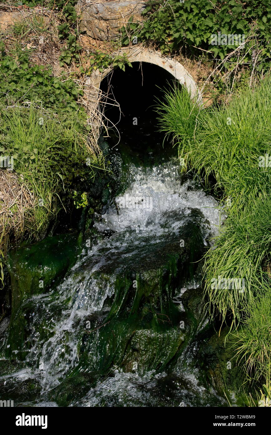 Algae formation in the course of a sewage treatment plant - Stock Image