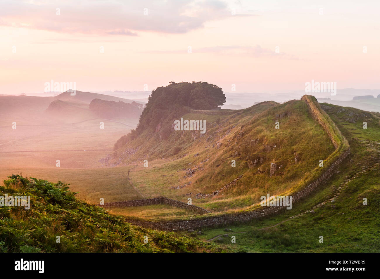 Hadrian's Wall at dawn with early morning mist near Housesteads Crag - Stock Image