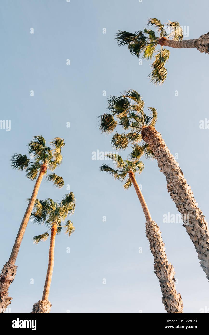 Palm trees in San Clemente, Orange County, California Stock Photo