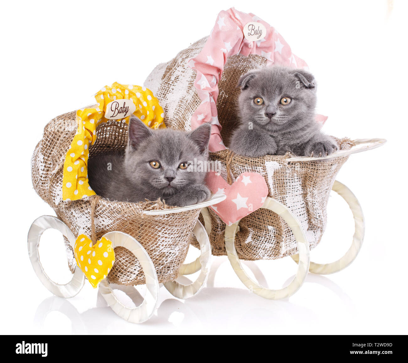 Baby Strollers Stock Photos & Baby Strollers Stock Images