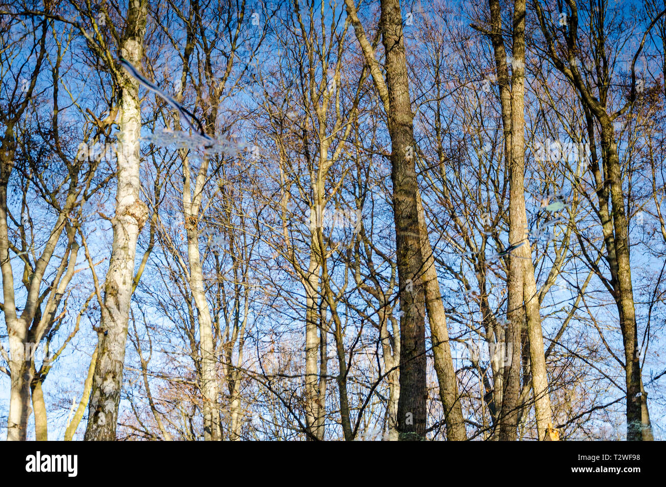 Abstract view of trees reflected in still water, Tiergarten, Berlin, Germany - Stock Image