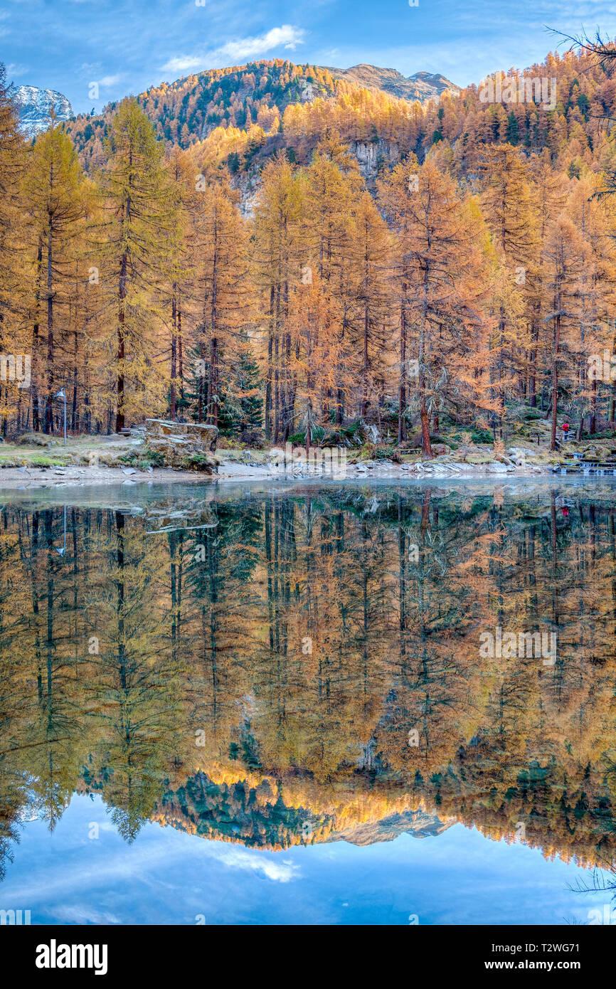 Italy, Aosta Valley, Rhemes Valley, Pellaud alpine lake, European larches forest in autumn (Larix decidua) Stock Photo