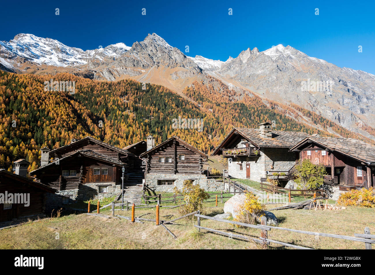 Italy, Valsavarenche, Gran Paradiso National Park, the village of Nex, renovated respecting the original outline by the architect Franco Binel; Norway Spruce and European larch forest in autumn - Stock Image