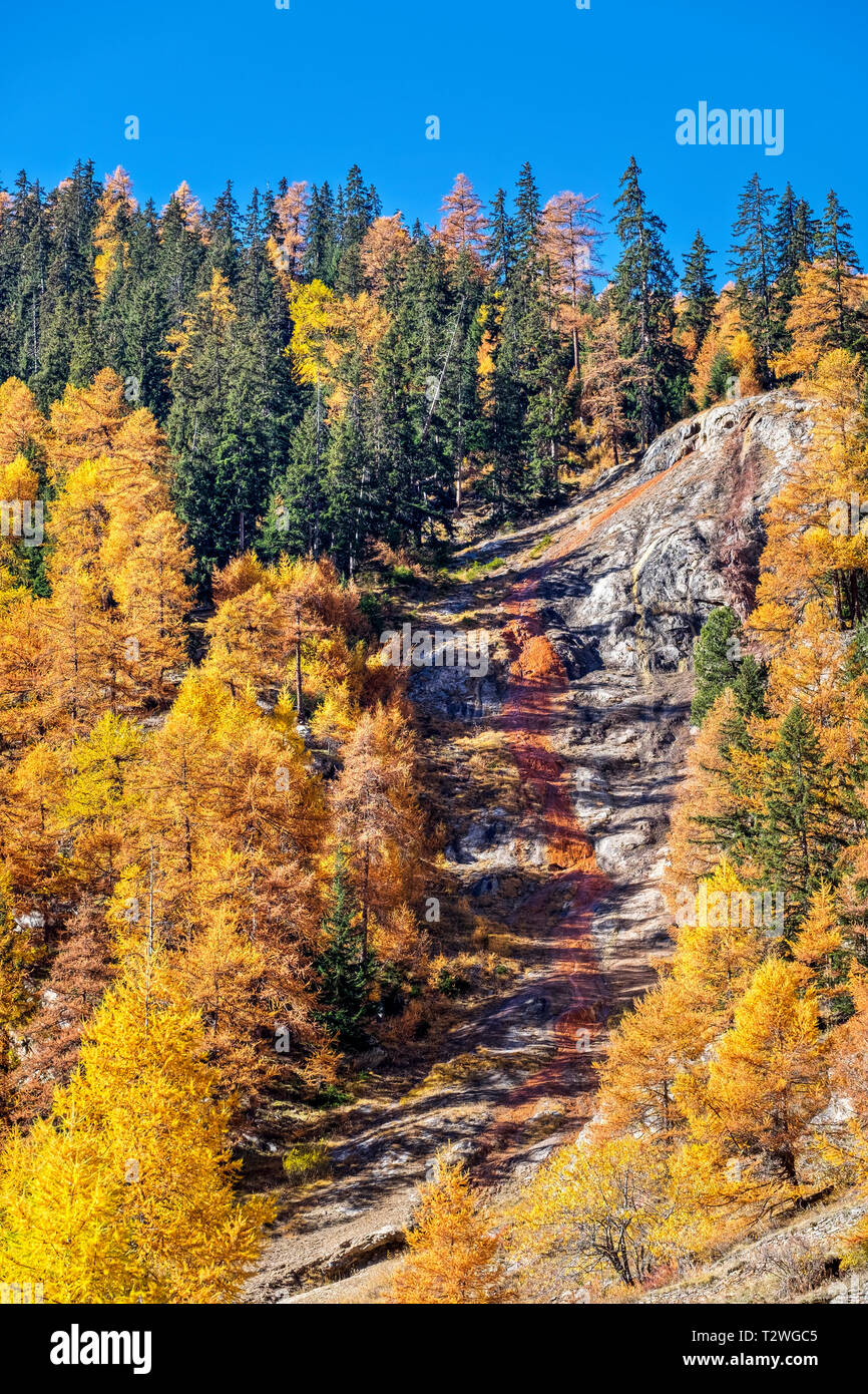 Italy, Valsavarenche, Gran Paradiso National Park, the ferruginous waters of the stream Eau Rousse; Norway Spruce and European larch forest in autumn - Stock Image
