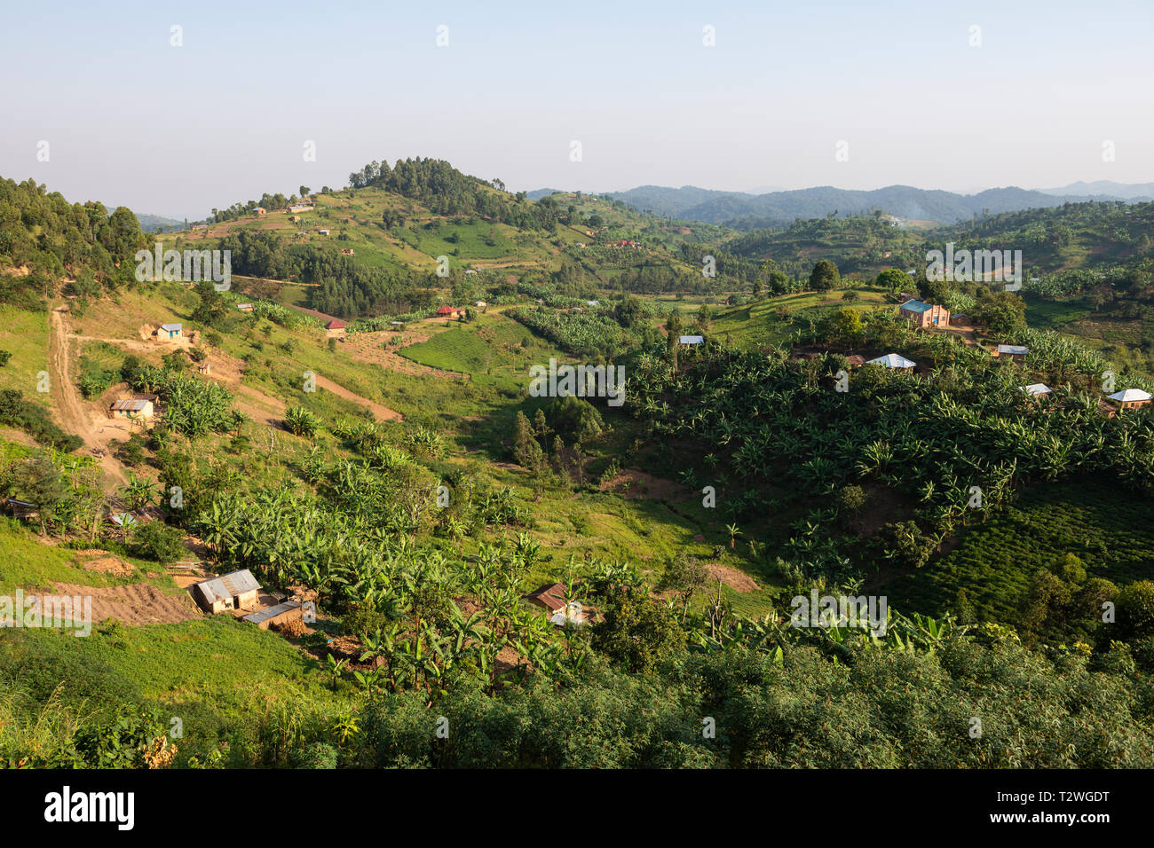 Banana and tea plantations in hill country north of Lake Bunyonyi in South West Uganda, East Africa - Stock Image