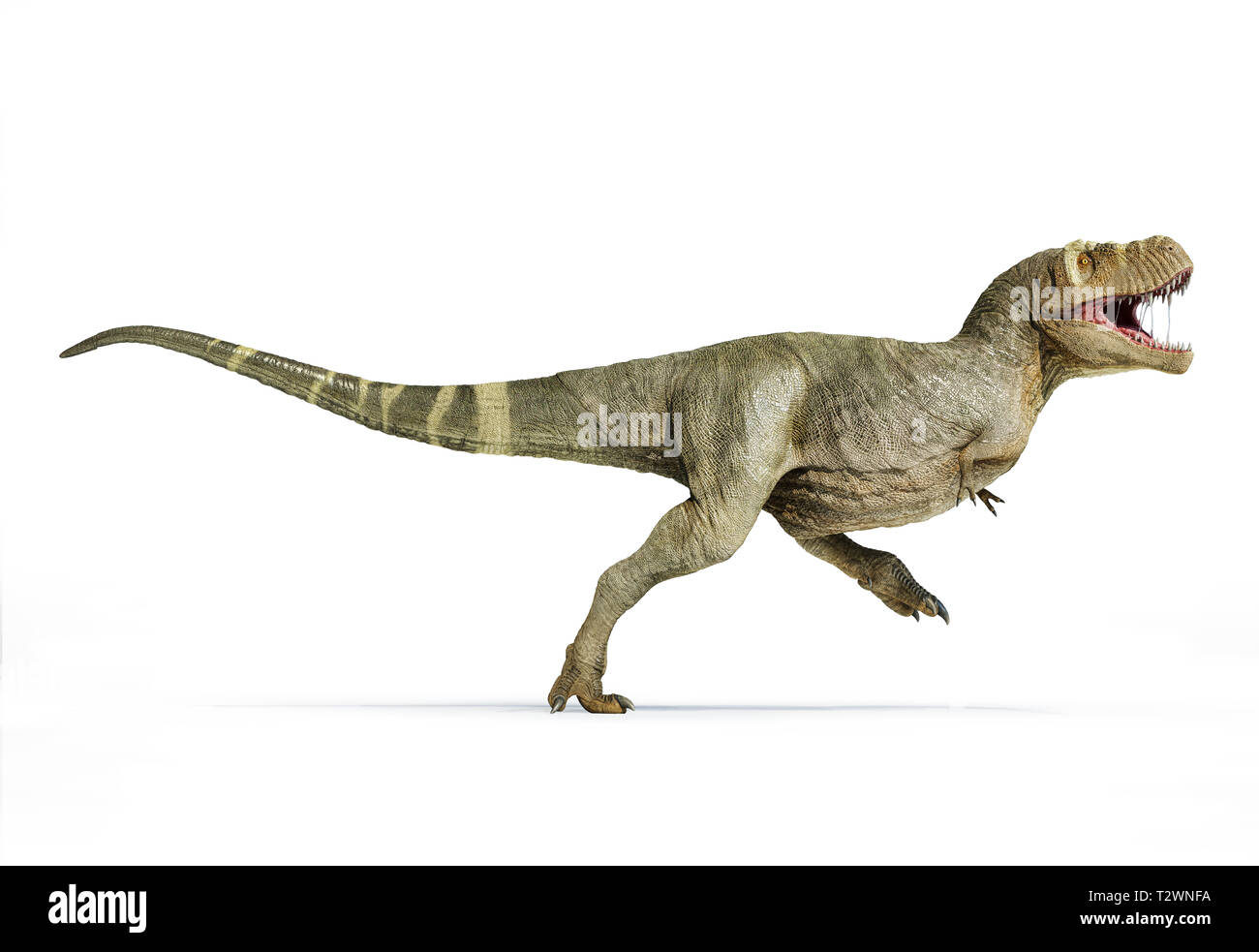 T Rex Full Body Walking Isolated On White Background Side View Stock Photo Alamy