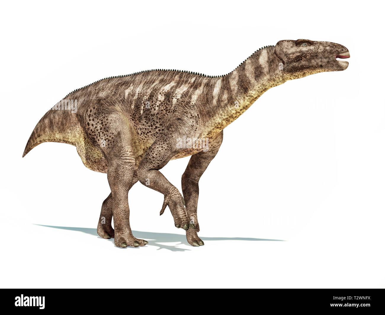 Iguanodon dinosaur isolated on white background with dropped shadow. - Stock Image