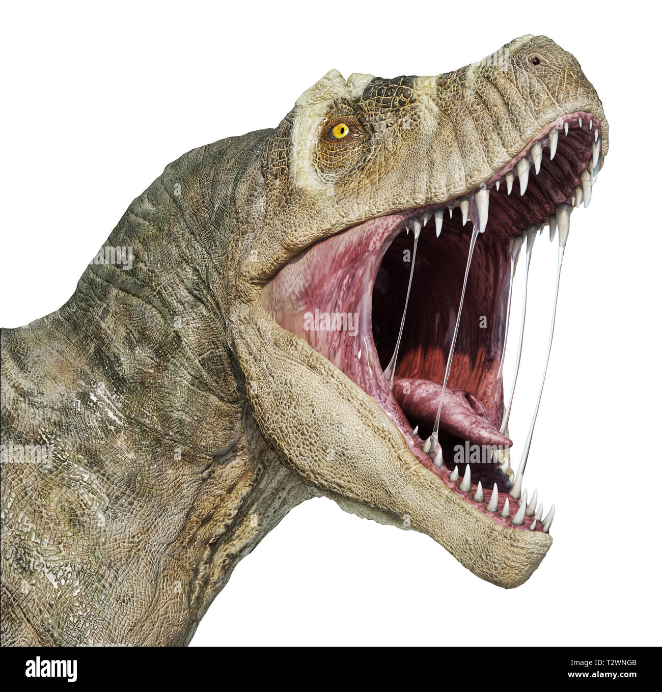 T-rex head close-up with open mouth, isolated on white background. - Stock Image