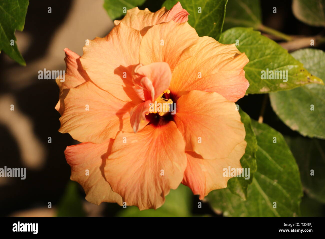 Frühling in Maspalomas auf Gran Canaria - Stock Image