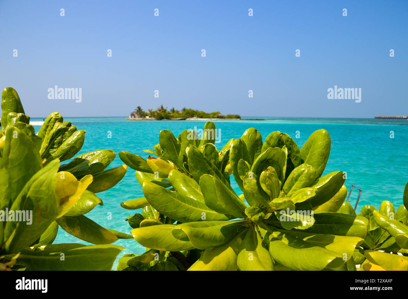Beautiful Tropical Maldives Resort Hotel And Island With