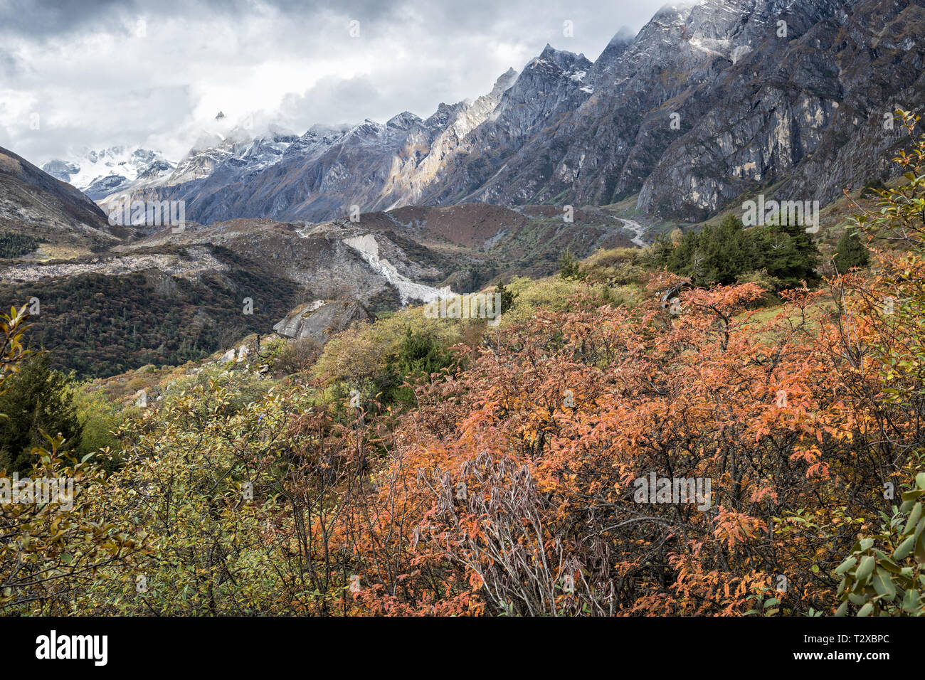 Mountains and vegetation near Thrika camp, Gasa District, Snowman Trek, Bhutan - Stock Image