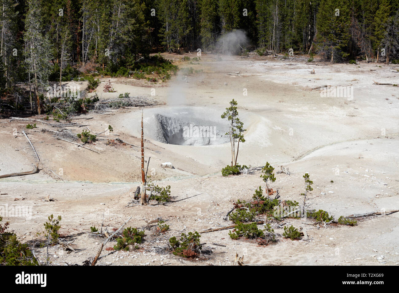 Steaming fumarole at Sulphur Caldron in Yellowstone National Park - Stock Image