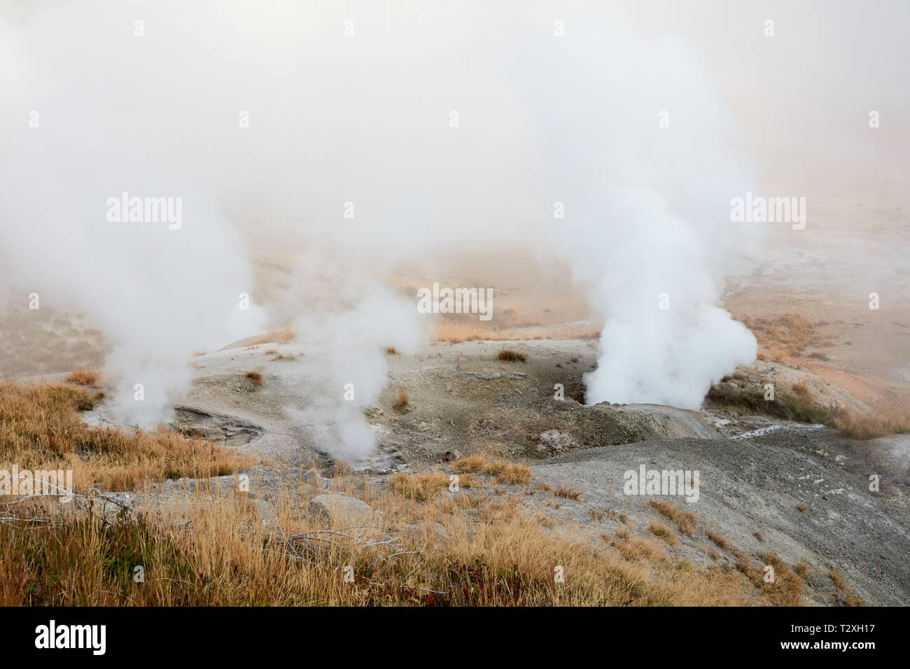 Fumaroles in Norris Geyser Basin, Yellowstone National Park - Stock Image