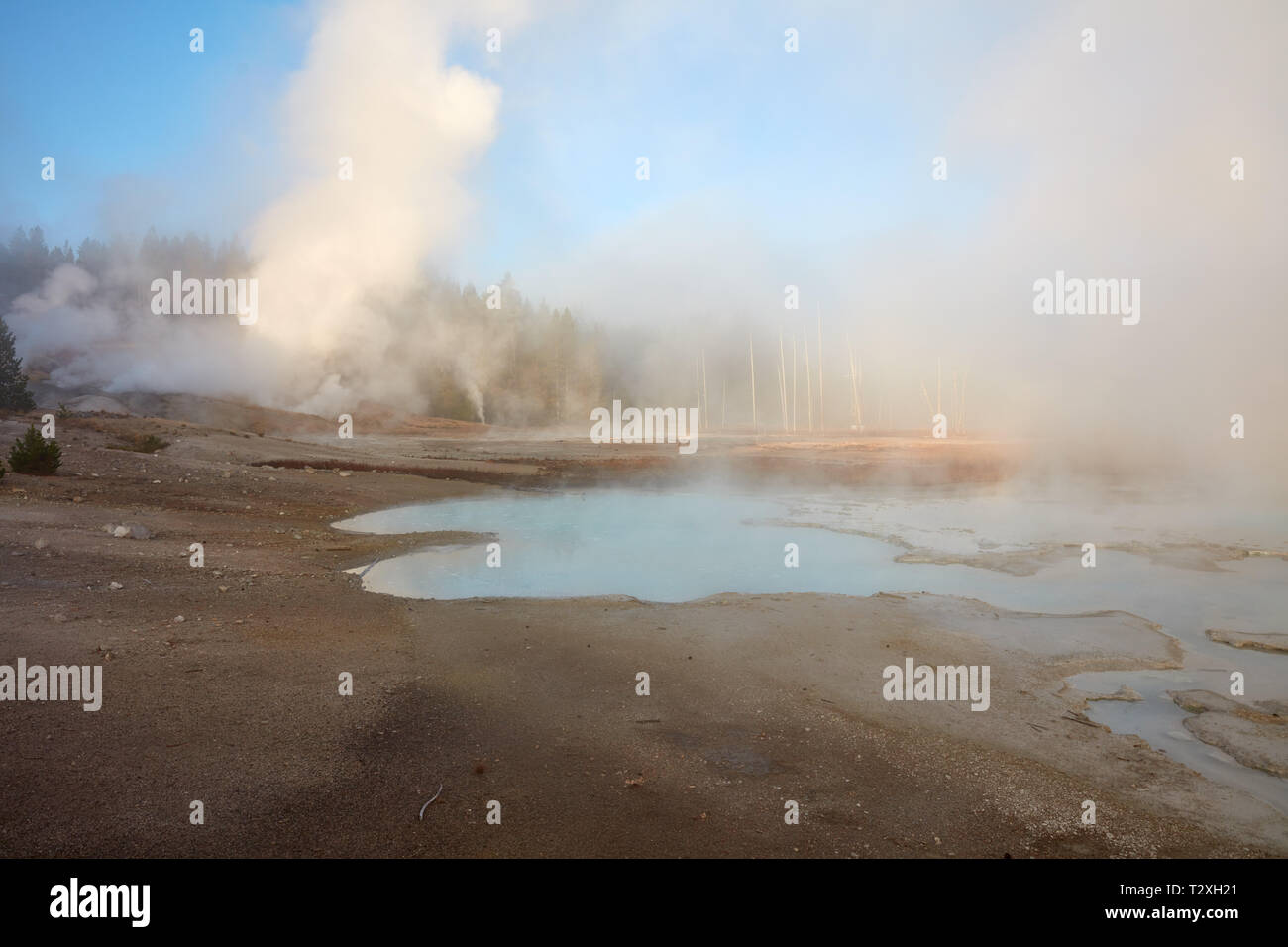 Thermal spring and fumaroles in Norris Geyser Basin, Yellowstone National Park - Stock Image