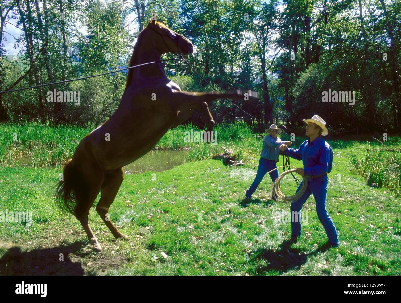 The Horse Whisperer Robert Redford High Resolution Stock Photography And Images Alamy