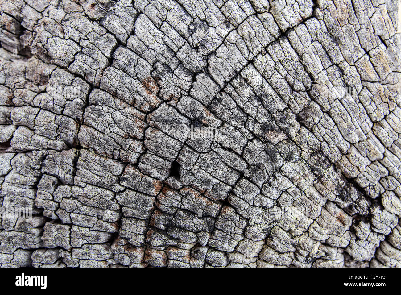 Old wood cut background texture overlay - Stock Image