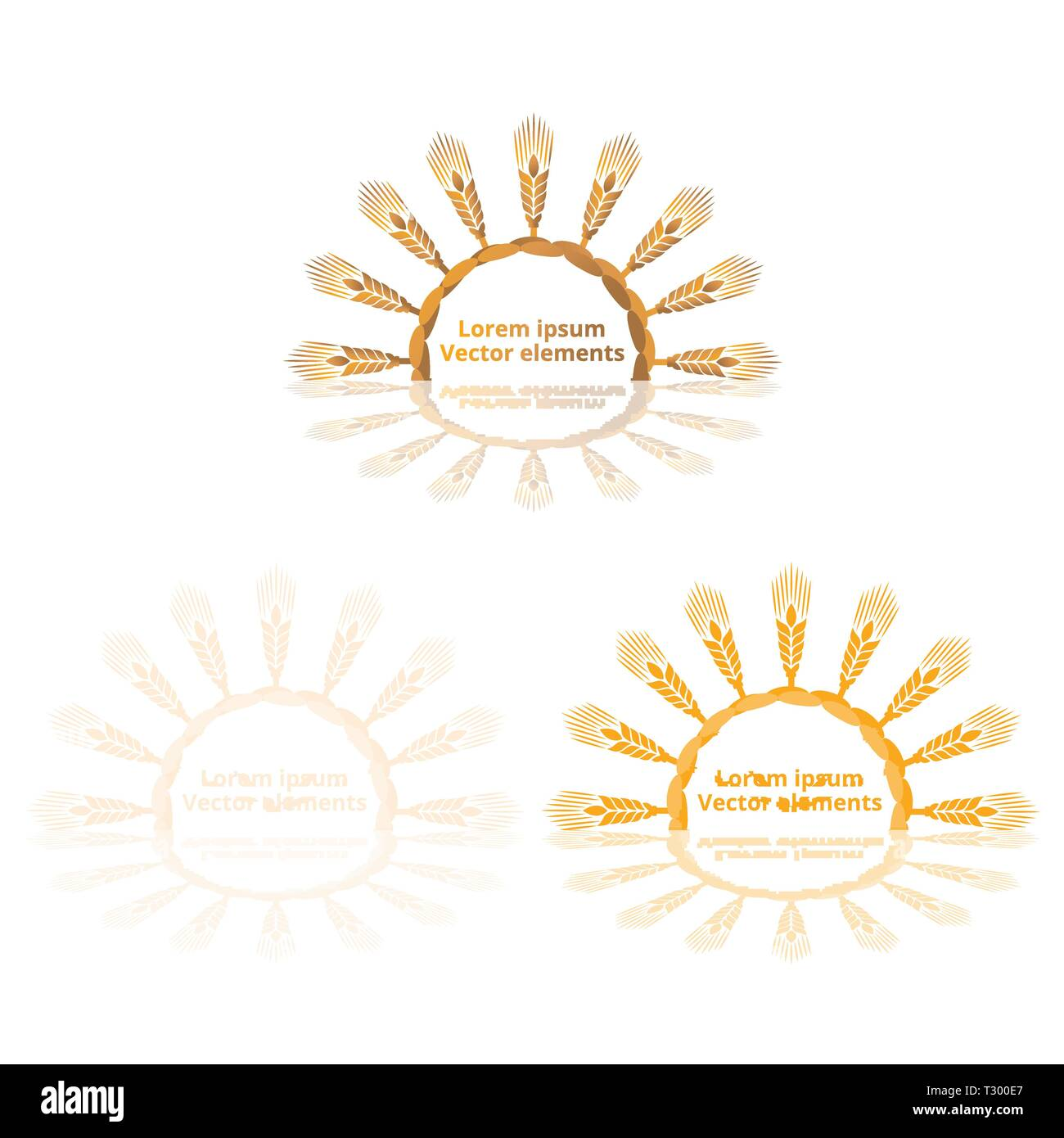 Wheat ears, oats or barley three vector    logotypes set golden on white background. Eco natural ingredient element, healthy food or agriculture, brea - Stock Image