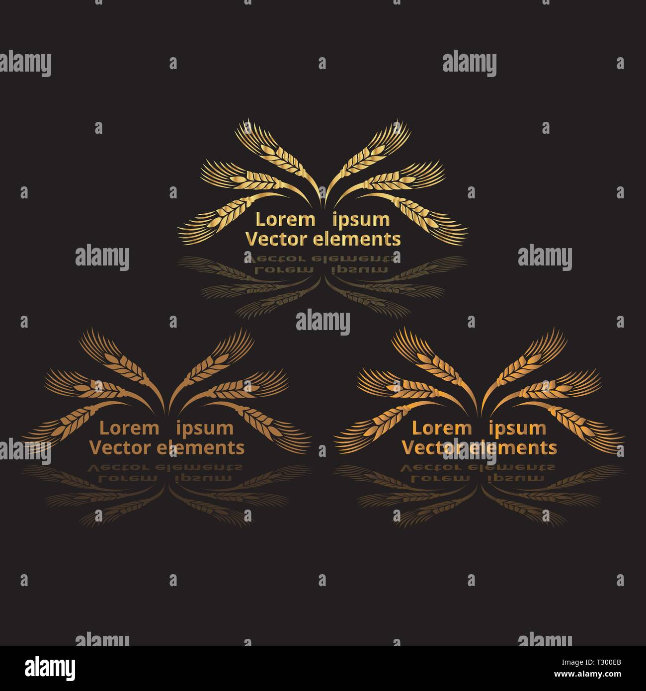 Wheat ears, oats or barley three vector    logotypes set golden on black background. Eco natural ingredient element, healthy food or agriculture, brea - Stock Image