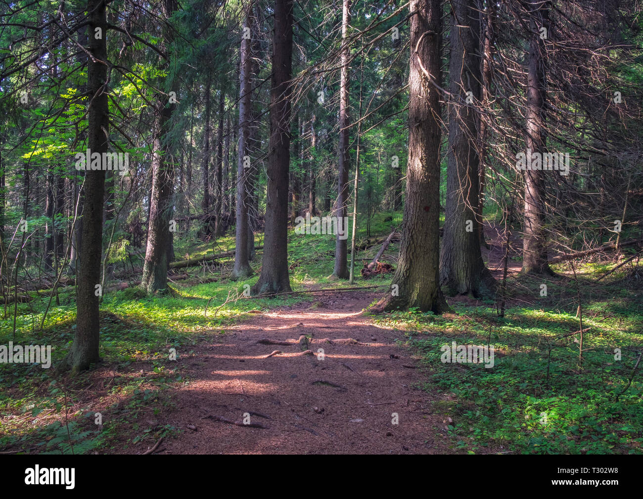 Idyllic forest path with atmospheric mood and nice sunlight at summer day in Finland - Stock Image