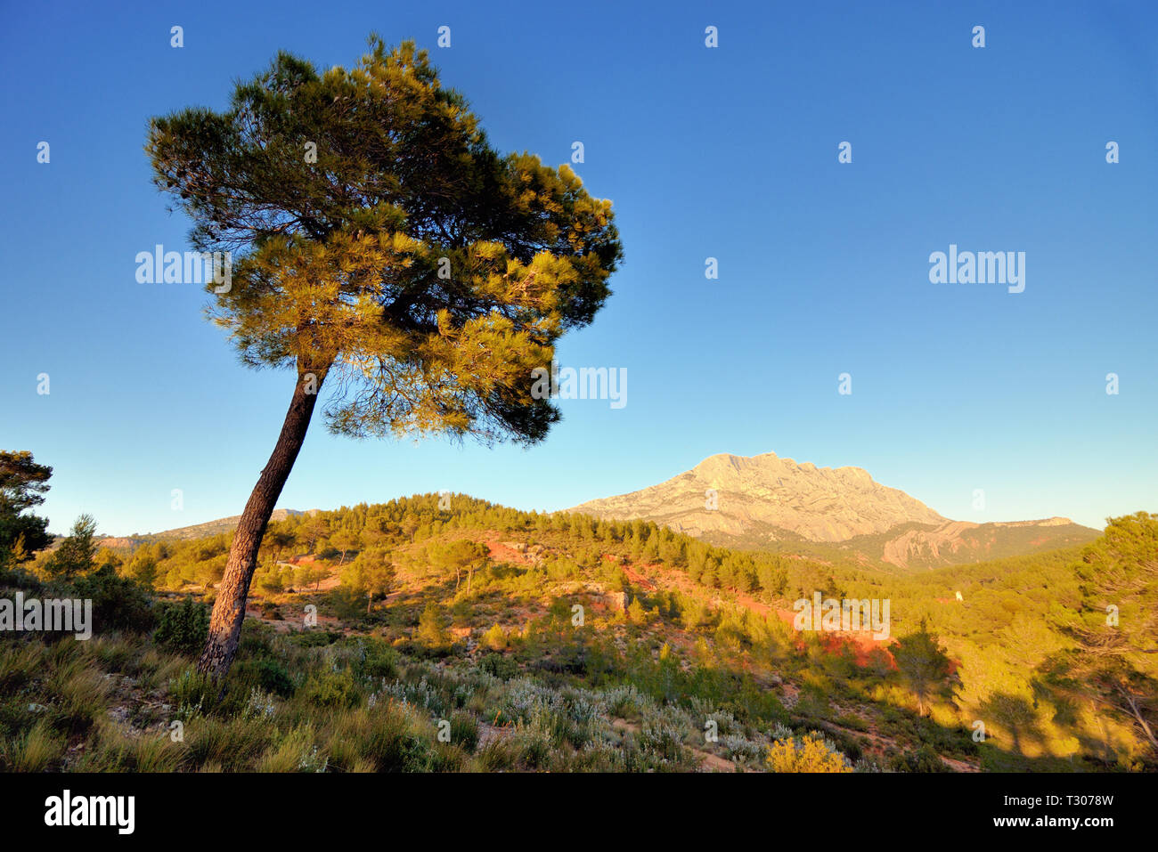 Mont Sainte-Victoire or Sainte Victoire Mountain & Pine Tree, the Peak Celebrated in the Paintings of Paul Cezanne, Aix-en-Provence Provence France - Stock Image
