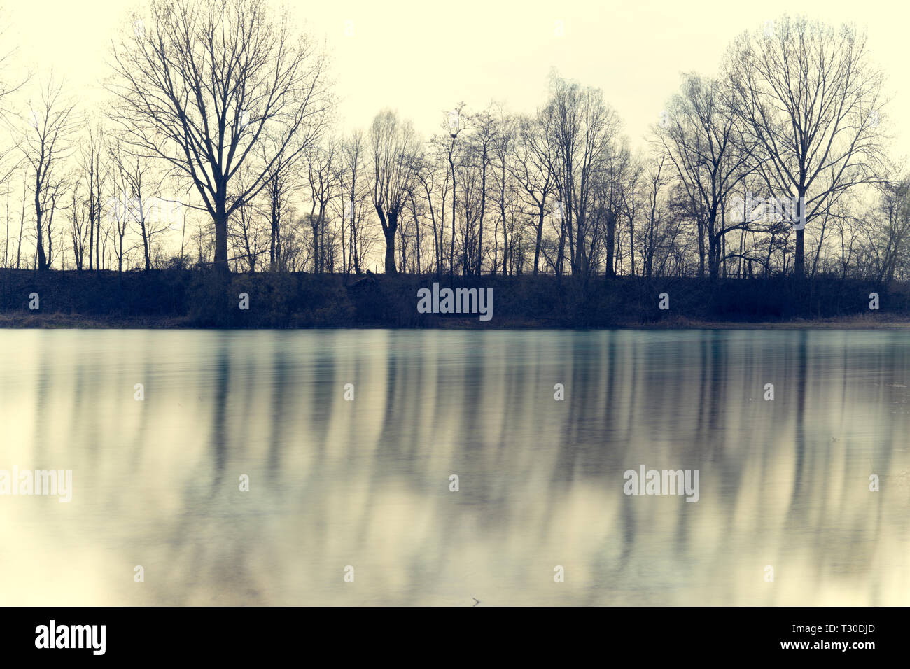 trees reflecting in water of Vöttinger lake in Germany - Stock Image