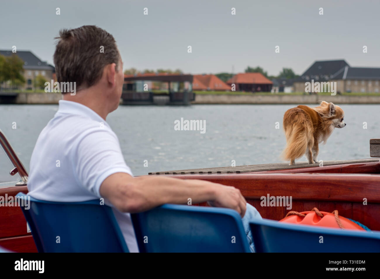 A man with his longhaired apple head Chihuahua enjoy a boat trip in Copenhagen harbour Stock Photo