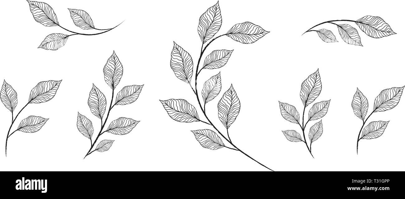 Vector designer elements set collection of greeng leaves herbs - Stock Image