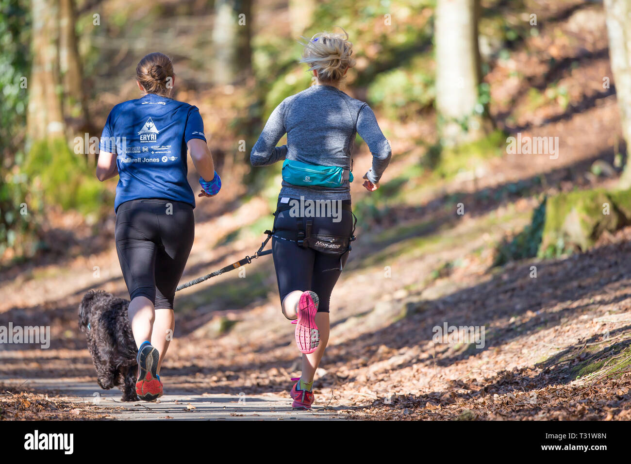 Rear view of two female joggers running through spring woodland in dappled sunlight & shadows: one wearing hands-free lead on waist exercising the dog. - Stock Image