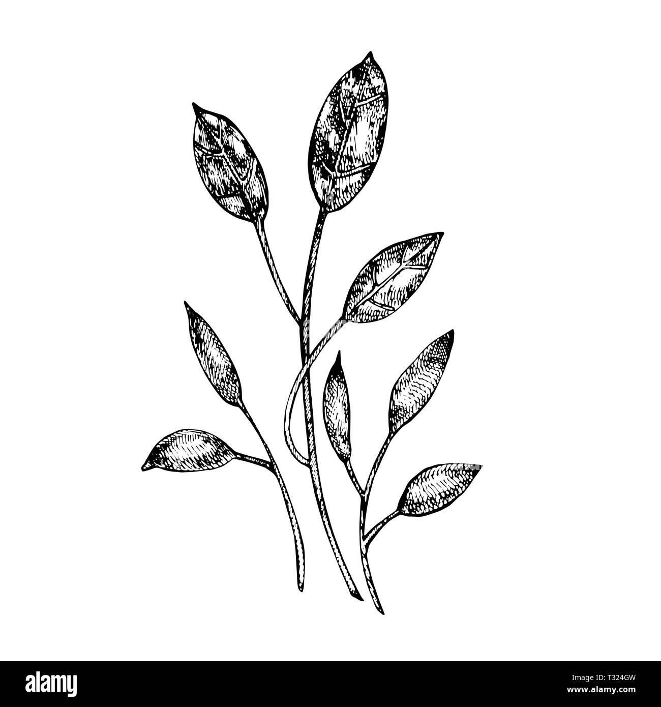 Grafic illustration of garden tools. Isolated on white background Stock Photo