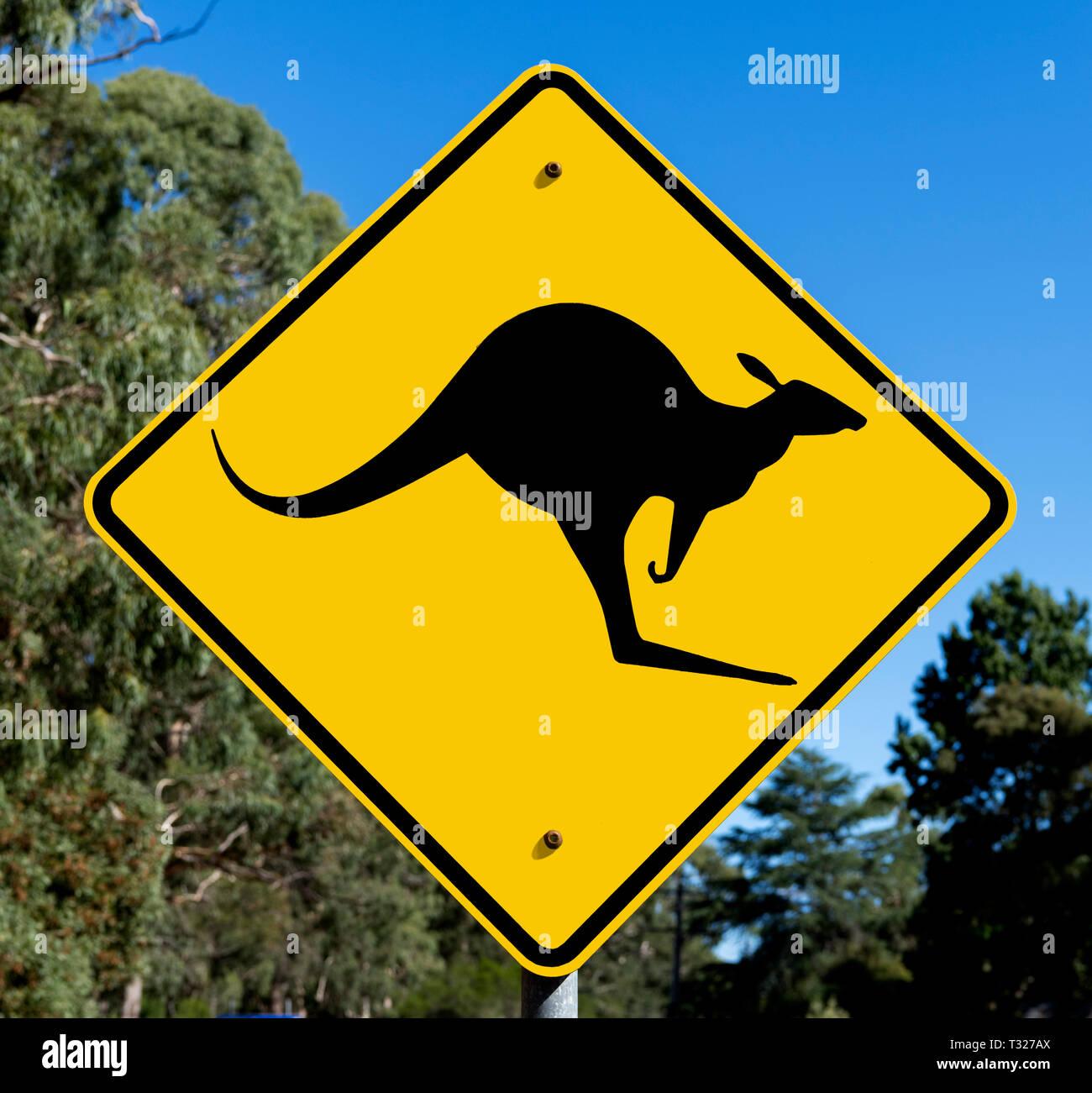 Beware of Kangaroos crossing road sign in the Grampians, Victoria, Australia - Stock Image