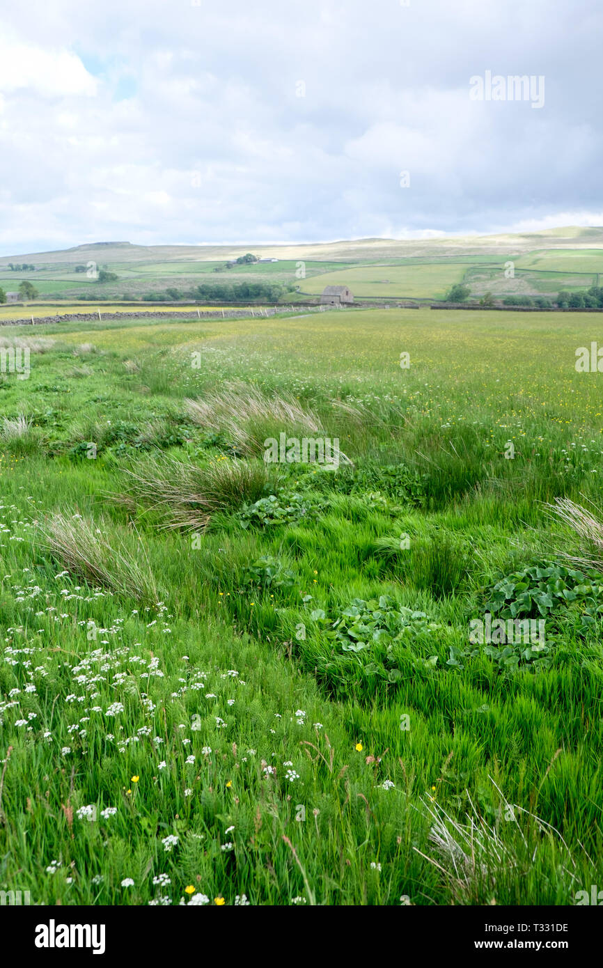 The traditional farming landscape of Hannah's Meadow Nature Reserve, part of the Durham Wildlife Trust in Teesdale, County Durham. - Stock Image