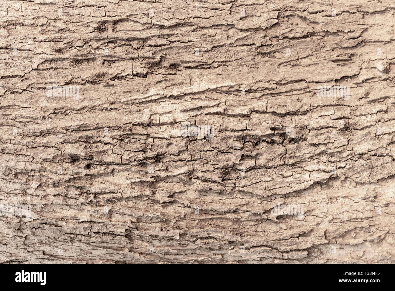 Beautiful gray tree bark background and texture. - Stock Image
