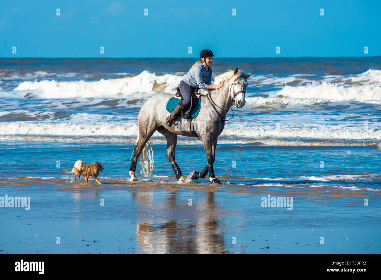 Horse and rider galloping on Holkham bay beach on North Nolfolk coast, East Anglia, England, UK. - Stock Image