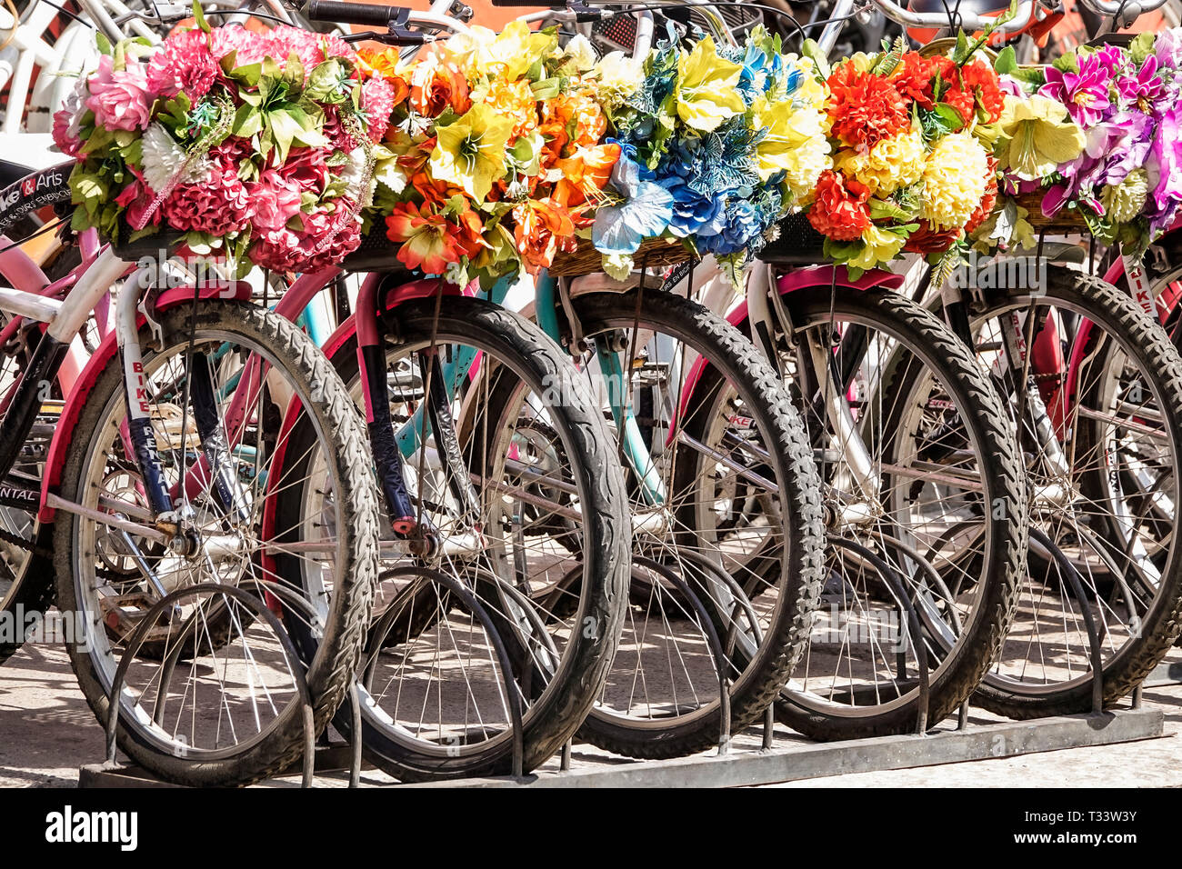 Cartagena Colombia Old Walled City Center centre Getsemani rental bicycles decorative flower baskets wheel - Stock Image