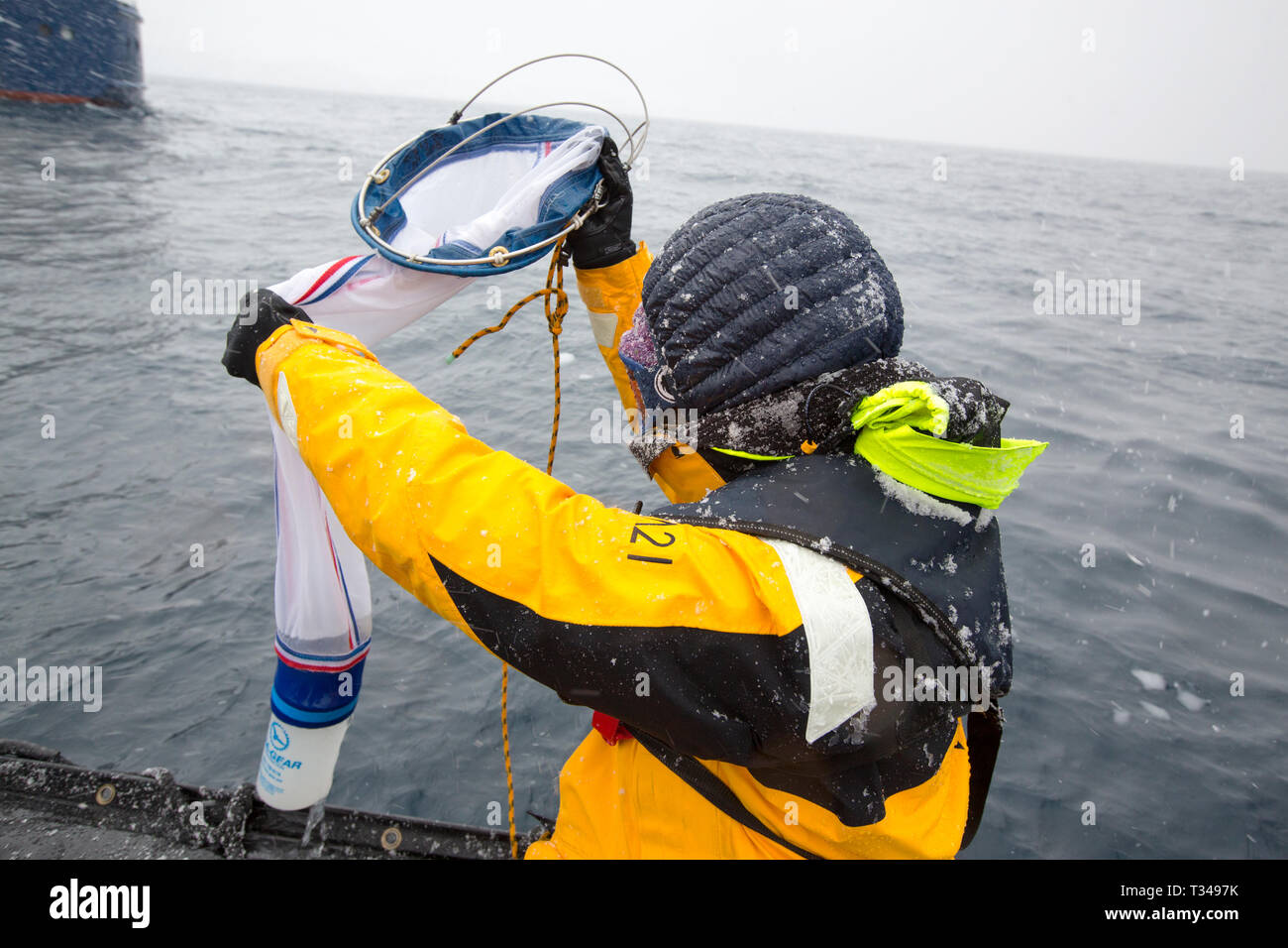 Alison Lee Cusick a scientist working on citizen science on an Antarctic cruise ship shows passengers how to trawl for plankton and algae, as part of  Stock Photo