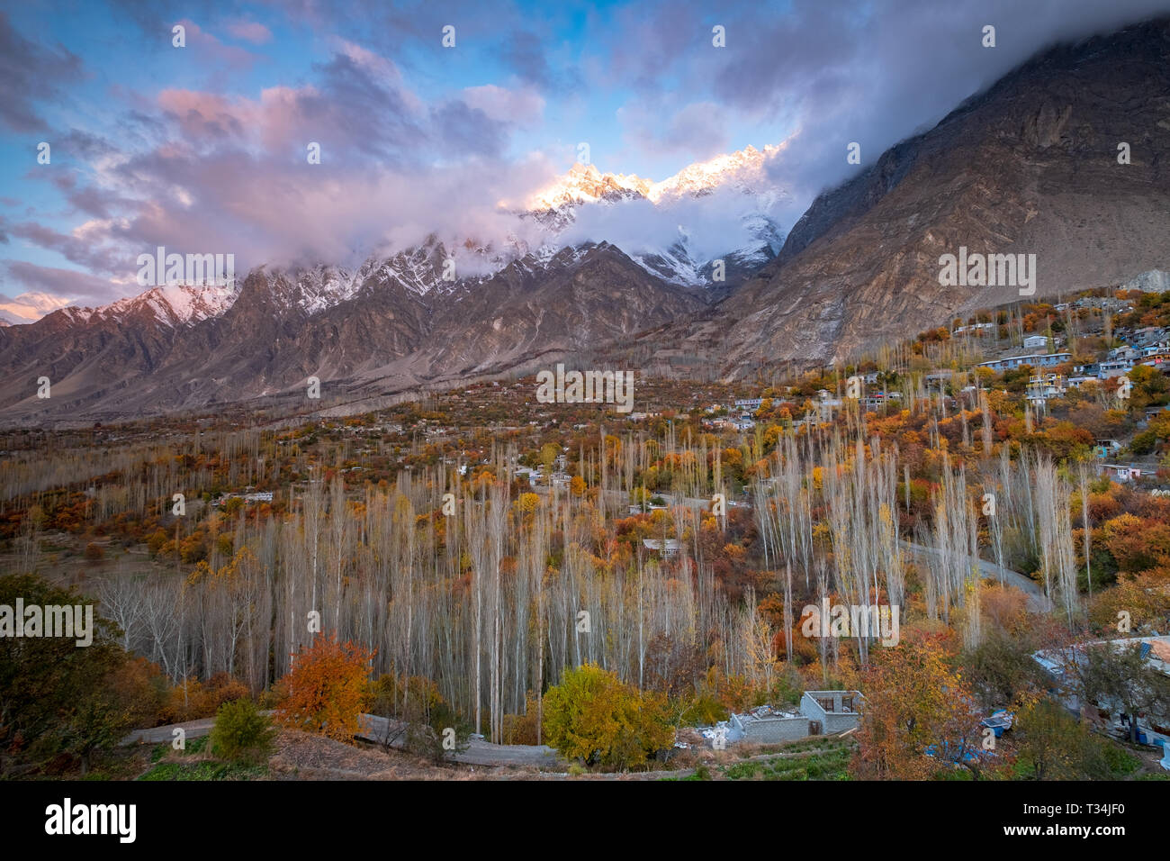 Alpine forest in autumn, Hunza, Gilgit-Baltistan, Pakistan - Stock Image