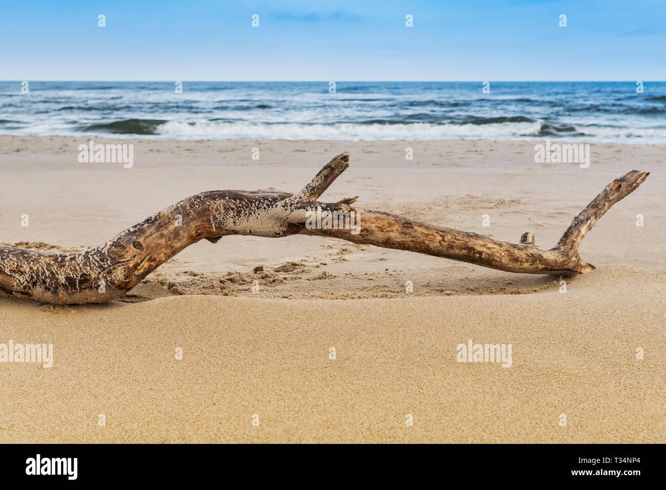 A tree branch lies on the beach of the Baltic Sea, Kolobrzeg, West Pomeranian, Poland, Europe - Stock Image