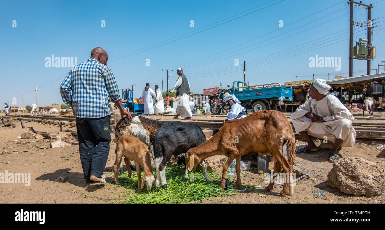 Nuri, Sudan, February 9., 2019: Market seller offering live sheep and goats for sale to customers at a market in Sudan. - Stock Image