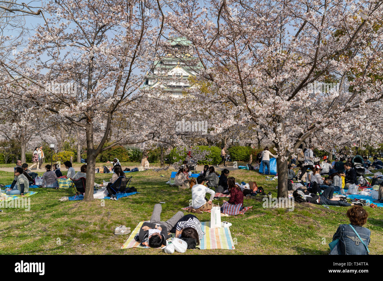 People sitting and having picnics, on blue and green sheets, under cherry blossom trees