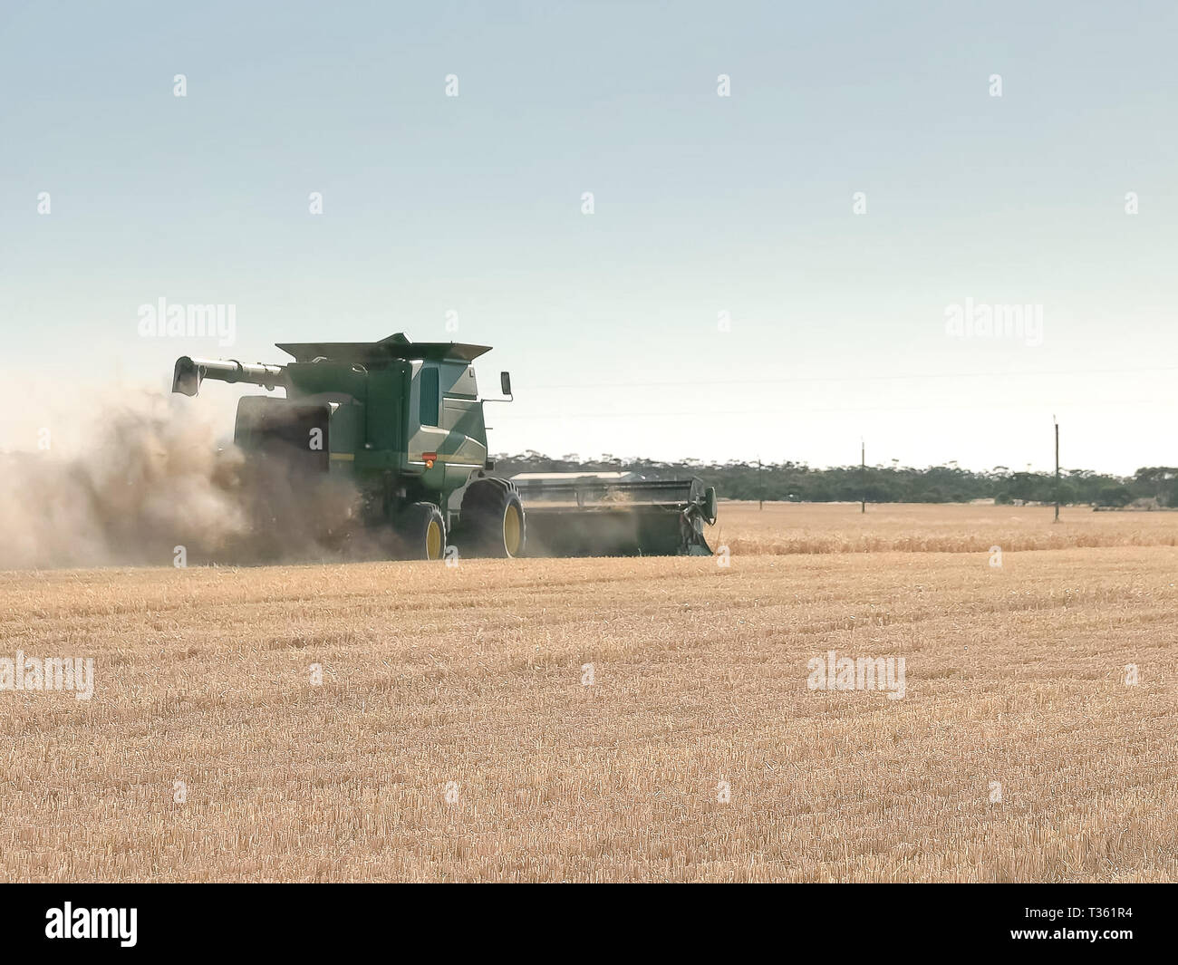 a combine harvester drives away from the camera on a wa grain farm - Stock Image