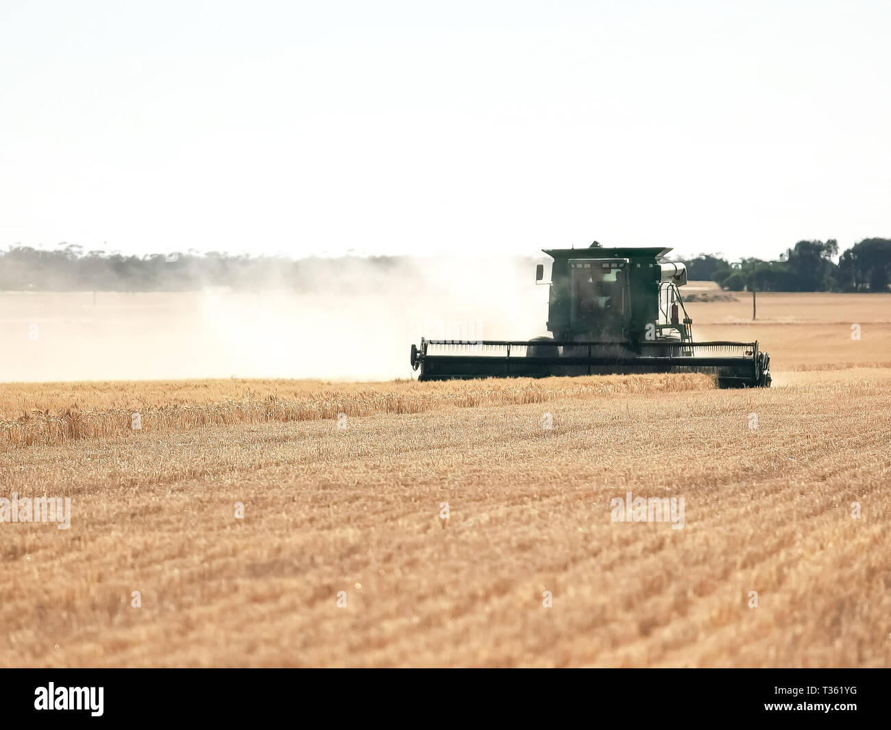 long shot of a backlit silhouetted header being used on a farm to harvest ripe grain - Stock Image