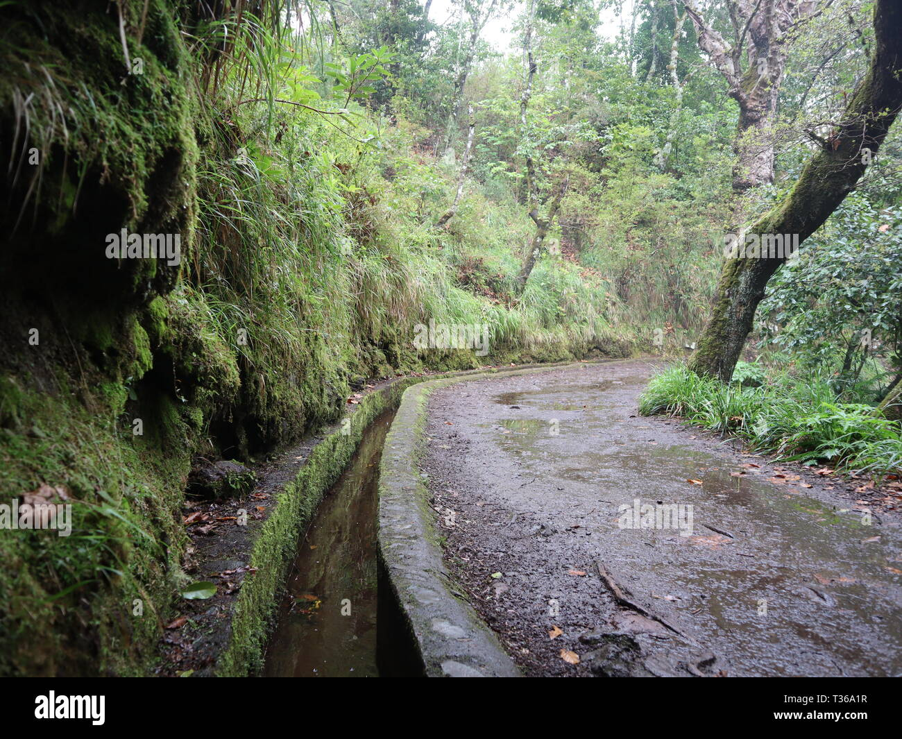 Levada walk in Madeira Islands, Portugal - Stock Image