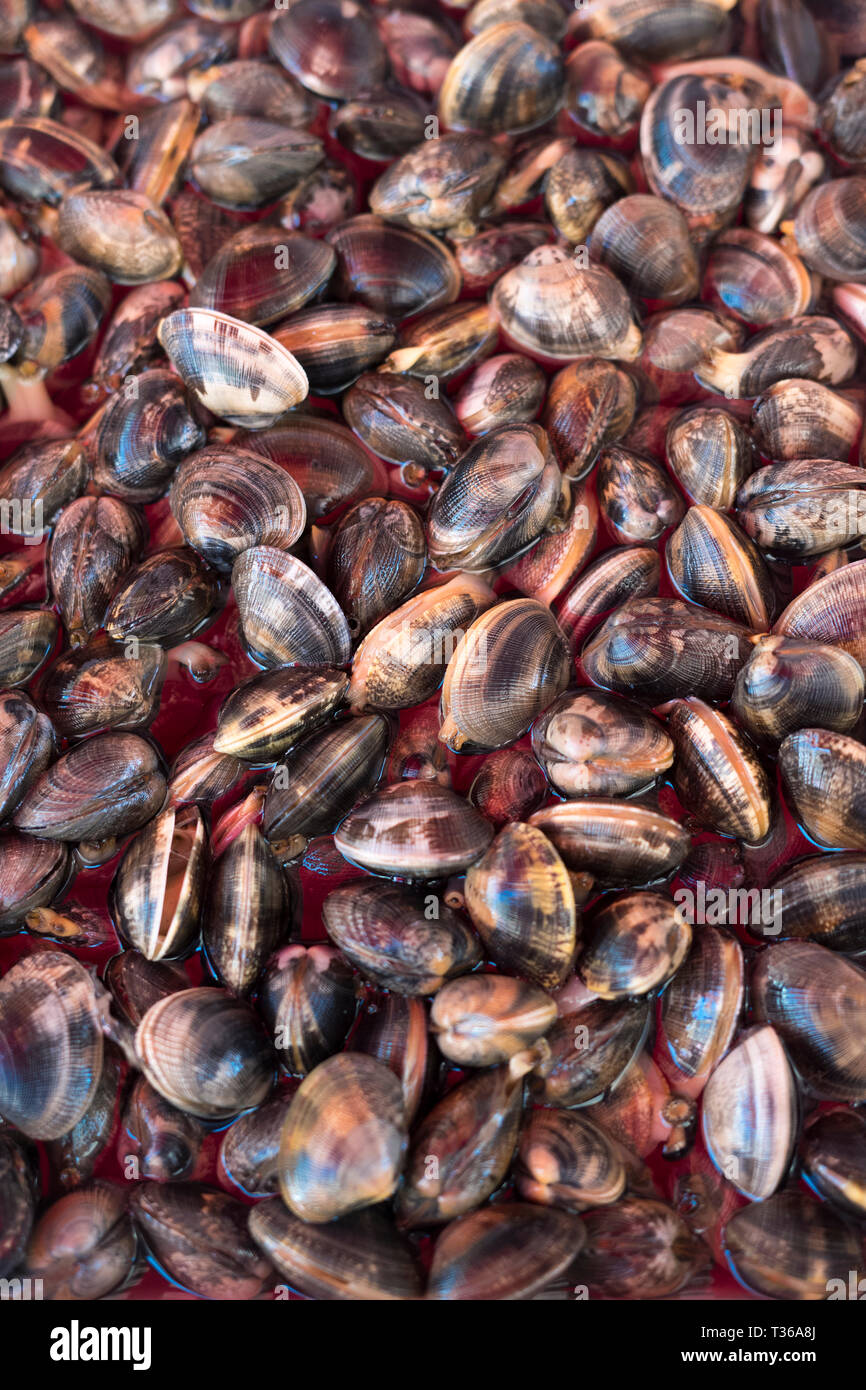 Local live clams - Vongale Veraci - on display for sale on market stall at old street market - Mercado -  in Ortigia, Syracuse, Sicily Stock Photo