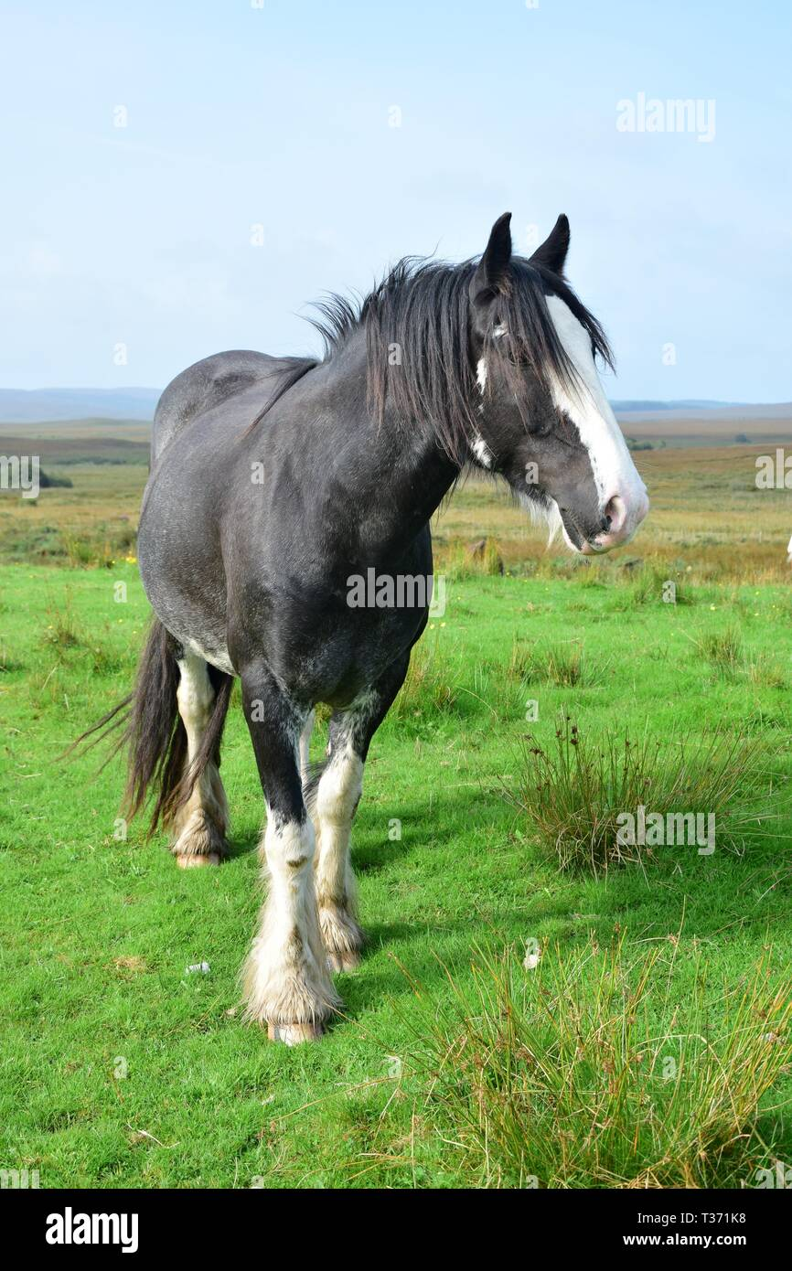 Beautiful Black Horse In Ireland Landscape In The Background Stock Photo Alamy