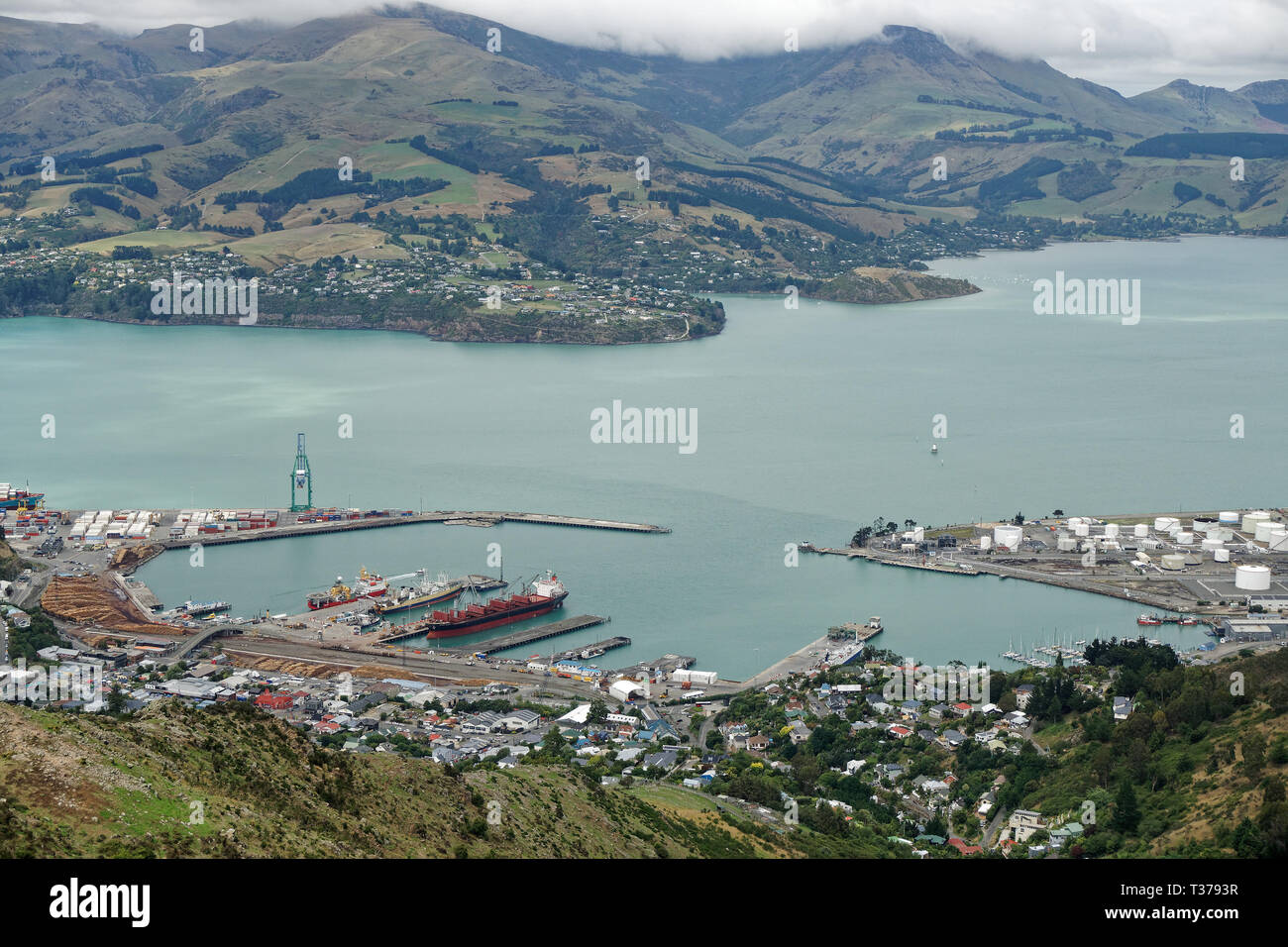 Lyttelton harbour from the Port Hills, New Zealand. Pine trees ready for export. - Stock Image