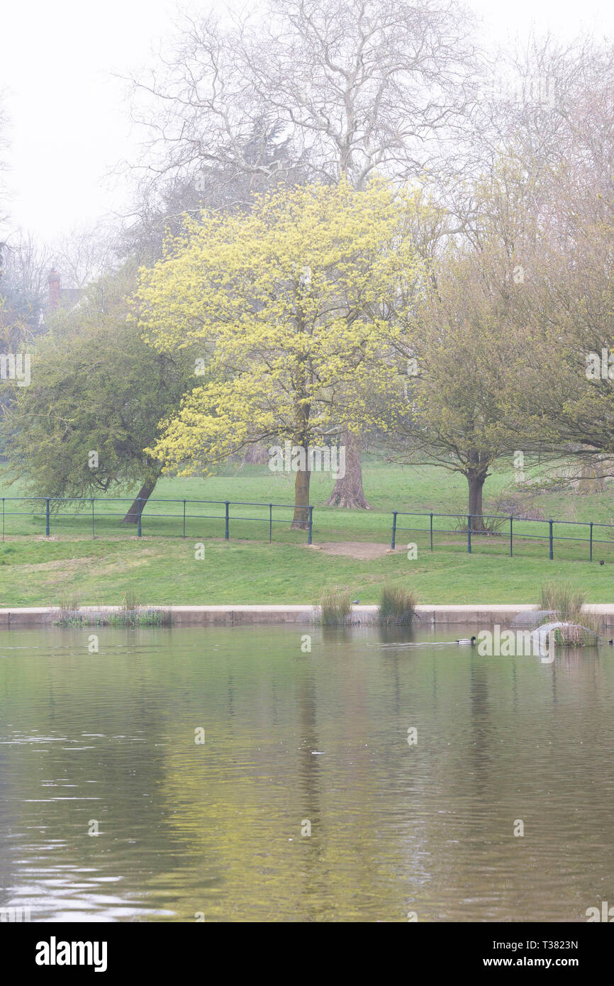 Northampton, UK. 7th April 2019. Abington Park. Weather. A dull damp morning looking across the park lake with hazy light mist in the air. Credit: Keith J Smith./Alamy Live News - Stock Image